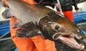 How well do you know freshwater fish in Maine