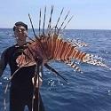 Pensacola Tournament Takes a Bite out of Lionfish Population