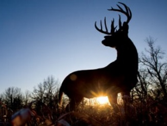 How Off-Season Deer Hunting with a Camera Can Help