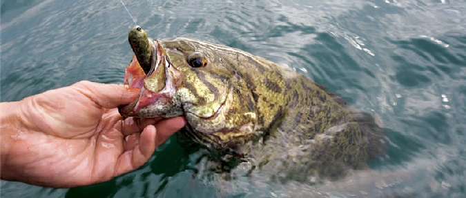 The 5 Fishing Lures Smallmouth Can't Resist