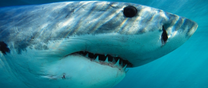 Are We Overvaluing Reef Sharks