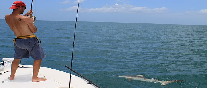 Targeting Sharks In The Northeast Region