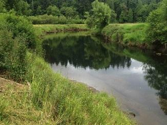 New Washington wetland bank advances fish habitat restoration