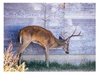 The Fight Against Chronic Wasting Disease