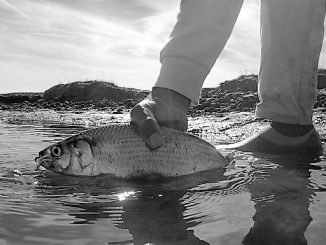 Shad Fishing on the St. Johns River