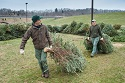 Christmas trees give W.Va. lakes a fishy boost