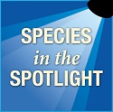 Species in the spotlight