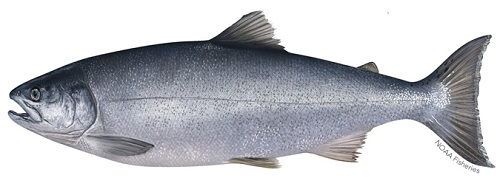 entral California Coast Coho Salmon