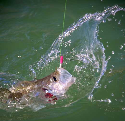 Sickle Hooks, Effective or Hoopla? | OutDoors Unlimited Media and