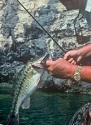 GET CRANKY WITH CRANKBAITS IN FALL