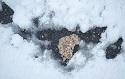 Road salt putting human, aquatic lives on a collision course