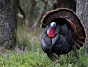 More Spring Turkey Hunting Mistakes You Shouldn't Make