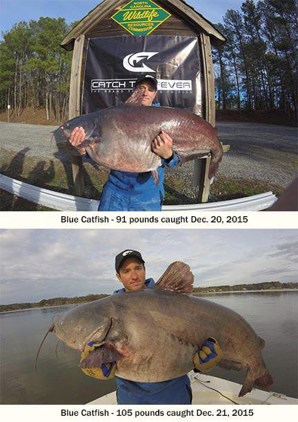 Lake Gaston Yields 3 Blue Catfish Records