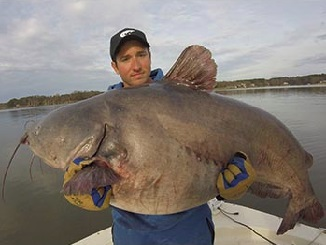 Lake Gaston Yields 3 Blue Catfish Records