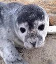 No Selfies with Seals