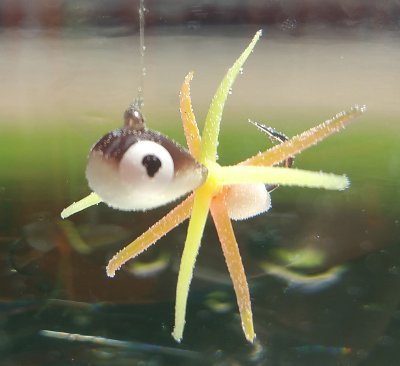 Deep Drop Panfish