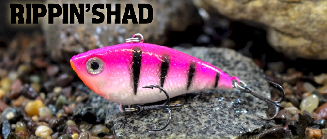 Enhanced Color Palette For Renowned Rippen' Shad 1