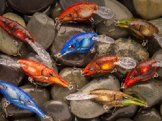 Shad Raps, DT Crankbaits In Retreating Craw Colors