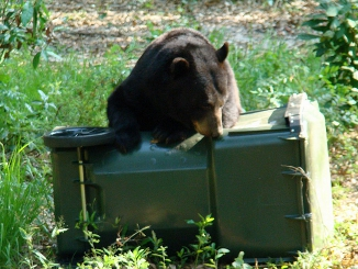 Waste Pro and FWC team up to reduce human-bear conflicts