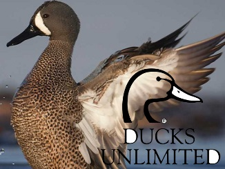 Ducks Unlimited - Tips for Hunting Early Teal