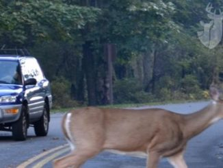 8 Tips For Avoiding a Deer-Vehicle Collision