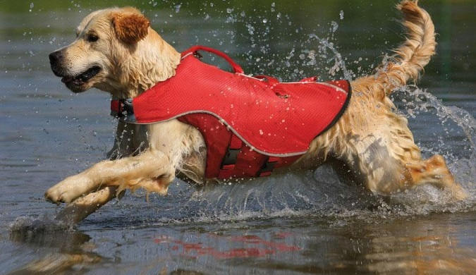 boating-safety-for-you-and-your-pet-2