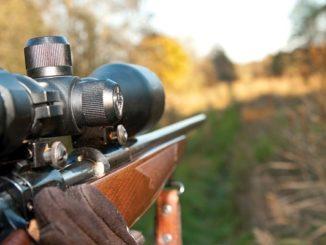New Jersey-Legislation Takes Aim at Black Bear Hunting Season