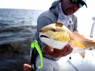 Z-Man Mag SwimZ - Redfish Video
