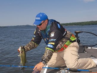 As Water Starts Cooling, Bass Follow Baitfish into Shallow Waters