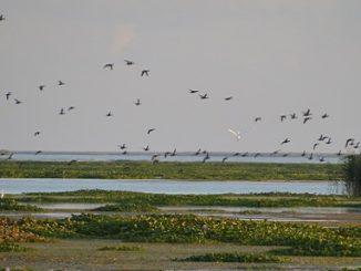 CCA, Ducks Unlimited team up for Gulf Coast restoration