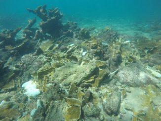 Coral Restoration Work Underway after Hurricane Matthew