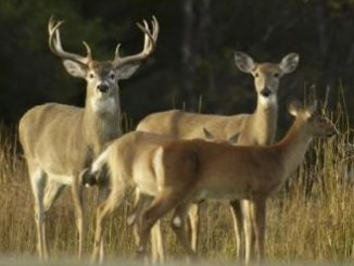 Hunting Continues to Drive Economic Impact in Michigan