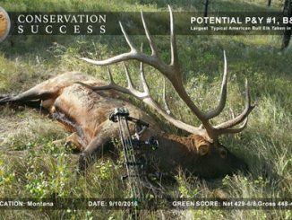 Potential New Archery World's Record Typical American Elk