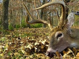 QDMA Offering Six-Month Internship in Education/Outreach Department