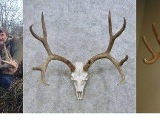 5 Simple Steps On How To Bleach A Deer Skull
