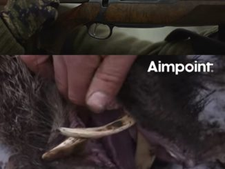 Wild Boar Fever 4 (Crazy Boar Hunt Video From Aimpoint)