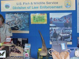 Greed Drives Destruction of Species Through Illegal Wildlife Trafficking