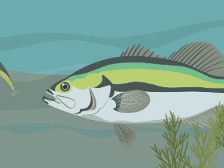 Do Fish See Line- Decoding Research and Manufacturer Claims 1