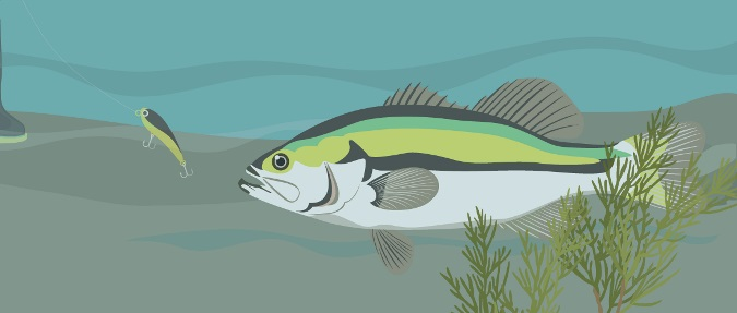 Do Fish See Line?: Decoding Research and Manufacturer