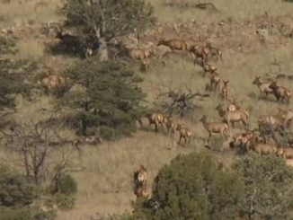 RMEF Surpasses 7 Million Acre Conservation Milestone