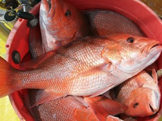 Chris Blankenship on Mission for Better Red Snapper Plan