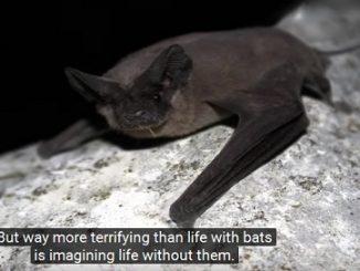 Going Batty Over Bats