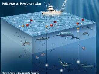 Swordfish Fishery Fetches a Higher Market Price Through Innovation