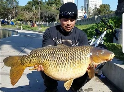50 pound carp in the middle of los angeles for Fishing in los angeles