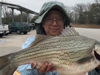 Record setting hybrid striped bass