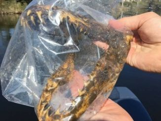 Fisherman catches mysterious shark jawbone in Mississippi River near Grand Rapids