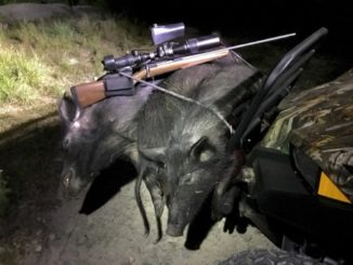 Get More Hogs with PIGS-DIG-IT and HOGS-HAMMER-IT