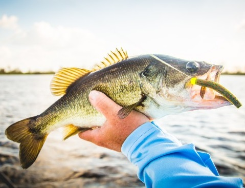8 Most Common Ned Rig Mistakes