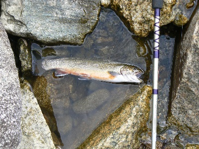September Trout fishing and Goose Hunting in the North Country; Almost