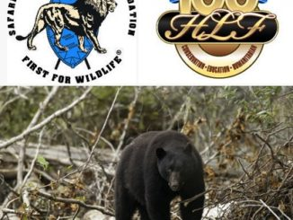 EXPANDING BLACK BEAR HUNTING IN CALIFORNIA